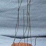 Ambiguë 1 pro-fil sculpture en fil de fer et bois
