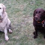 Orpheus (links) und Fiona, zwei Schaphausener, 11 und 8 Jahre alt