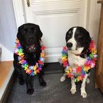 Pearl feierte mit Sammy ihre 6. Geburtstag