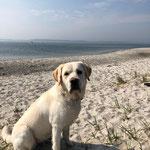 Frieda wird jetzt zum Rettungshund ausgebildet