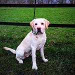 Frieda hat ihre erste Prüfung zum Rettungshund bestanden