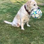 Monty, mittlerweile schon 9 Jahre alt