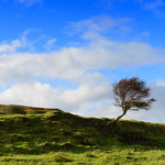 Einsamer Baum im Herbststurm auf Skye