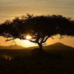 morning has broken over the Mara