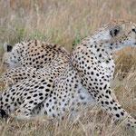 stalking a Hyeana