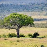 Masai Mara plains