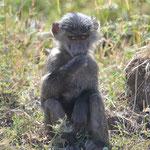 babboons child