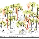 Pour Nicolas Luigi, conversion de taillis de chêne pubescent