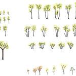 Pour Nicolas Luigi, étude sur chêne pubescent
