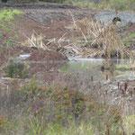 Regenrückhaltebecken südlich der Firma Schneider
