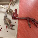 Die Verletzung ist zu massiv, der Graureiher muss eingeschläfert werden - Foto: Björn Behrendt