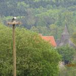 Weißstörche am Nest - Foto: Friedrich-Karl Menz