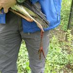 Befreiter Graureiher mit zertrümmertem Bein - Foto: Stefan Wagner