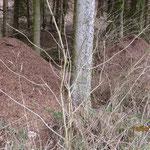 Ameisenhaufen bei Bellnhausen - Foto: Friedrich-Karl Menz
