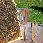 Werkzeuge - Smoker, Bienenbesen, Stockmeisel