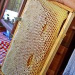 Honigwabe wird zerkleinert