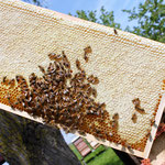 volle Honigwabe