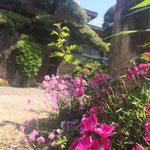 玄関の花たち