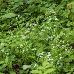 Bild: Blühende Pflanzen