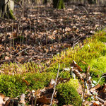 Bild: Waldboden