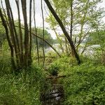 Bild: Waldschneise