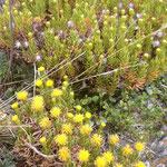 Bild: Gelbe Blumen