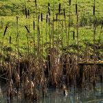 Bild: Wasserpflanzen