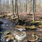 Bild: Am Flusslauf