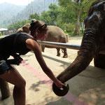 Sanctuaire pour éléphants maltraités à Chiang Mai