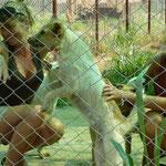 Chiens récupérés suite aux inondations de Bangkok en 2011, 400 chiens dans le centre