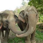 Communication entre éléphants