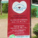 Association pour la protection des animaux bénévolat possible pour les aider à Koh Lanta