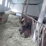 Pferdeparadies-Palmetshofer