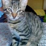 Tigri jetzt Bubu - neues gibts durch einen klick aufs Bild