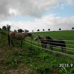 Pawel lernt fremde Pferde kennen...