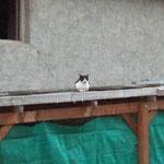 Kali hat einen neuen Ausguck für sich entdeckt, seit das Fenster auf ist.