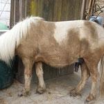 paniertes Pony
