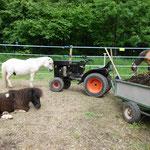 Gruppenbild mit Traktor