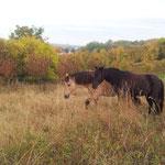 Luzie schiebt Pawel über die Weide ;-)