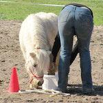 Wer ist hier das Pferd?!?