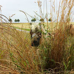Glücklicher Mini im Gras