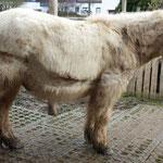 Donnie mit geschorenem Anti-Schwitz-Streifen bei Bäh-Wetter im Januar