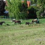 Lange Leitung beim Herde verteidigen: Siehe Video unten ;-)
