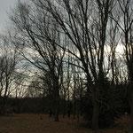 ナヤノギャラリー  周辺の雑木林