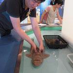 ZZ vs shark 1, Tさん対サメ(Jun. 2013)