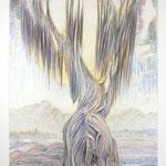 Gruß an Oregon / Farbstiftzeichnung / 76 cm x 57 cm / 1992