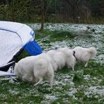 Die Zerstörerbande: Riga und Leni kümmern sich um die Mäuse im Garten