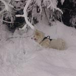 31.01.2015 Toben im Schnee ist immer noch das Beste;  Hier Leni