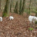 28.11.2013 Ausflug in den Wald