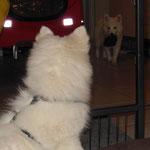 Leni wartet, Lexi bringt mal wieder ein Finken...